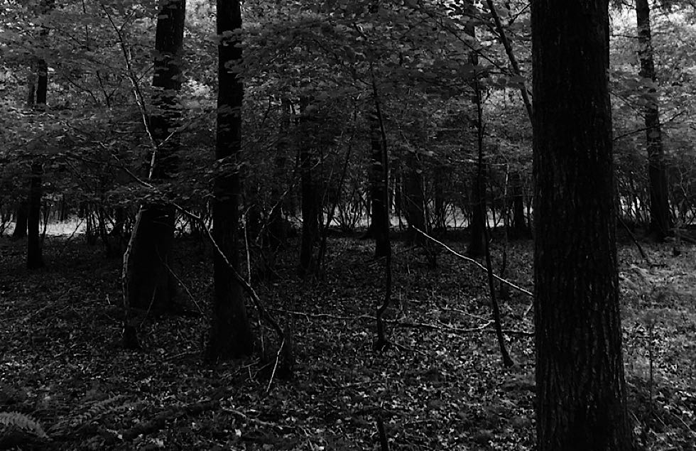 A black and white photo of a forest